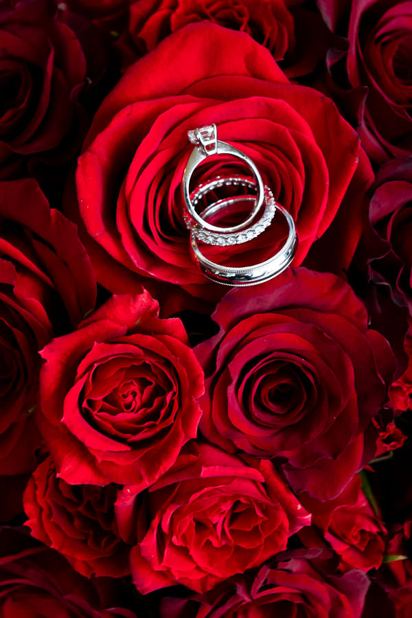 close up of wedding rings on top of red roses