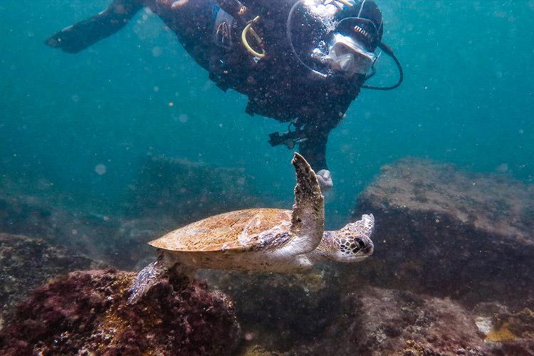 Scuba Diving in Armação de Buzios, Brazil